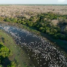 aka-Pantanal-2011-08-15__D3X8111.jpg