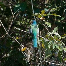 aka-Pantanal-2011-08-16__D3X8330.jpg