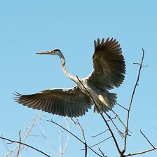 aka-Pantanal-2011-08-16__D3X8522.jpg