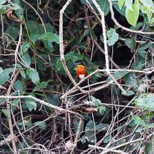 aka-Pantanal-2011-08-16__D3X8660.jpg