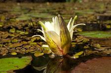 aka-Pantanal-2011-08-17__D2X3087.jpg