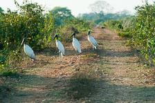 aka-Pantanal-2011-08-17__D3X8821.jpg