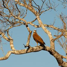 aka-Pantanal-2011-08-17__D3X8867-Edit.jpg