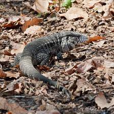 aka-Pantanal-2011-08-17__D3X8980.jpg
