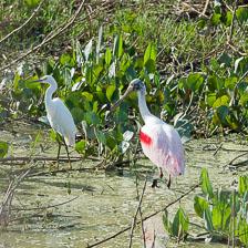 aka-Pantanal-2011-08-17__D3X9022.jpg