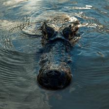 aka-Pantanal-2011-08-18__D2X3203.jpg