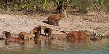 aka-Pantanal-2011-08-18__D3X9368.jpg