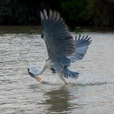 aka-Pantanal-2011-08-18__D3X9537.jpg