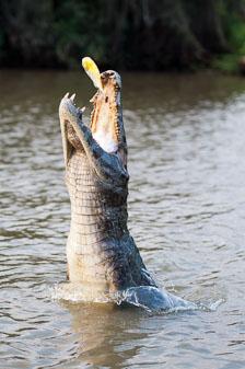 aka-Pantanal-2011-08-18__D3X9559-Edit.jpg