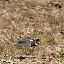 aka-Pantanal-2011-08-19__D3X9710.jpg