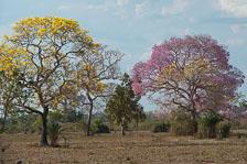 aka-Pantanal-2011-08-19__D3X9736.jpg