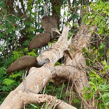 aka-Pantanal-2011-08-20__D3X0032.jpg