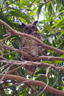 aka-Pantanal-2011-08-20__D3X9906.jpg