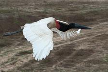 aka-Pantanal-2011-08-21__D3X0371.jpg