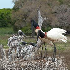 aka-Pantanal-2011-08-21__D3X0476.jpg