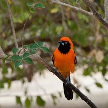 aka-Pantanal-2011-08-21__D3X0538.jpg
