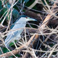 aka-Pantanal-2011-08-21__D3X0708.jpg