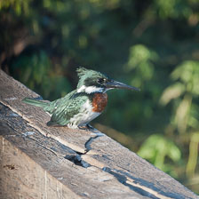 aka-Pantanal-2011-08-22__D3X0792.jpg