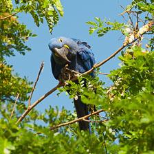 aka-Pantanal-2011-08-22__D3X0868.jpg
