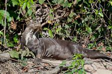 aka-Pantanal-2011-08-22__D3X0942.jpg