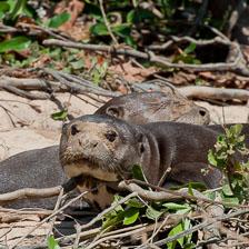 aka-Pantanal-2011-08-22__D3X0968.jpg