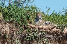 aka-Pantanal-2011-08-22__D3X0982.jpg