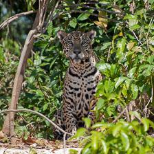 aka-Pantanal-2011-08-22__D3X1028.jpg