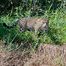 aka-Pantanal-2011-08-22__D3X1051.jpg