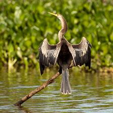 aka-Pantanal-2011-08-22__D3X1152.jpg