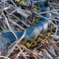 aka-Pantanal-2011-08-22__D3X1195.jpg