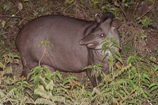 aka-Pantanal-2011-08-22__D3X1310.jpg