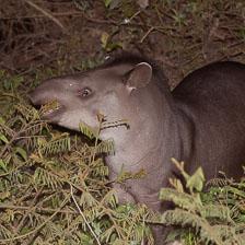 aka-Pantanal-2011-08-22__D3X1313.jpg