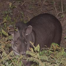aka-Pantanal-2011-08-22__D3X1314.jpg