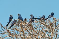 aka-Pantanal-2011-08-23__D3X1378.jpg