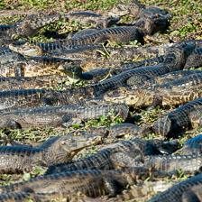 aka-Pantanal-2011-08-23__D3X1716.jpg