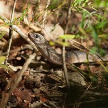 aka-Pantanal-2011-08-23__D3X1762.jpg