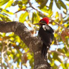 aka-Pantanal-2011-08-24__D3X1891.jpg