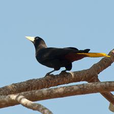 aka-Pantanal-2011-08-24__D3X1950.jpg