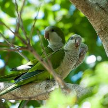 aka-Pantanal-2011-08-24__D3X2010.jpg