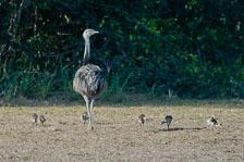 aka-Pantanal-2011-08-24__D3X2028.jpg