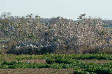 aka-Pantanal-2011-08-24__D3X2039.jpg
