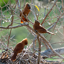 aka-Pantanal-2011-08-24__D3X2076.jpg