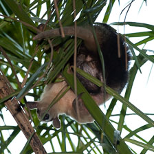 aka-Pantanal-2011-08-25__D3X2122.jpg