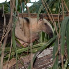aka-Pantanal-2011-08-25__D3X2137.jpg