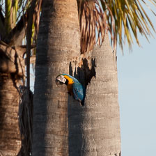aka-Pantanal-2011-08-09__D3X5286.jpg