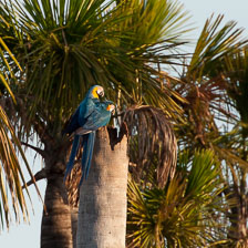 aka-Pantanal-2011-08-09__D3X5321.jpg