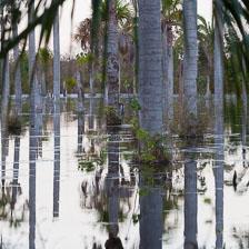 aka-Pantanal-2011-08-09__D3X5342.jpg