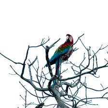aka-Pantanal-2011-08-11__D3X5903.jpg