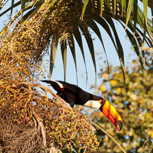 aka-Pantanal-2011-08-13__D3X6448.jpg