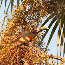 aka-Pantanal-2011-08-15__D3X7469.jpg